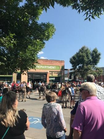 Gold Rush Days Burro Race on East Main Street in Buena Vista